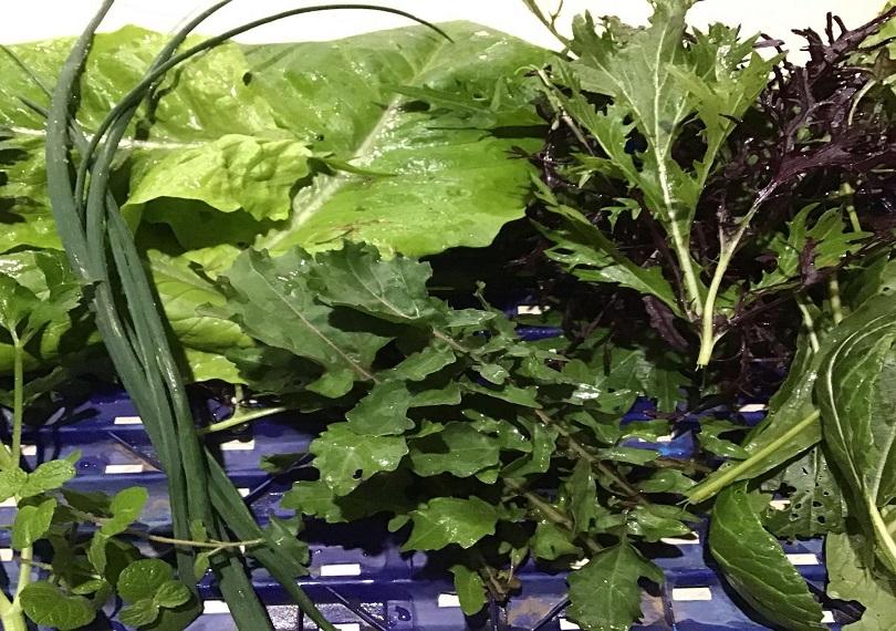 Salad greens ~ growing
